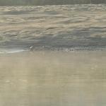Gangesgavial